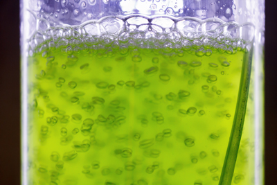 Algae making biofuel